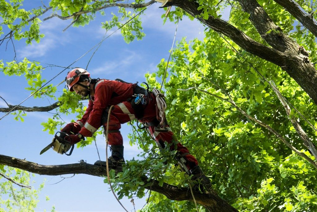 man cutting branches of the tree