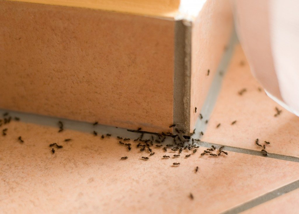 Ants inside of home
