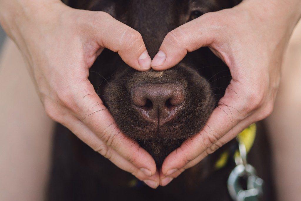 love for doggo
