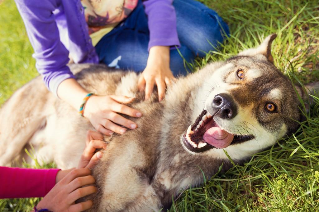 people petting dog